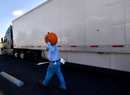 A helper shoulders a pumpkin Wednesday as volunteers and others unloaded the gourds at Disability Resources, Inc. for their annual pumpkin patch.