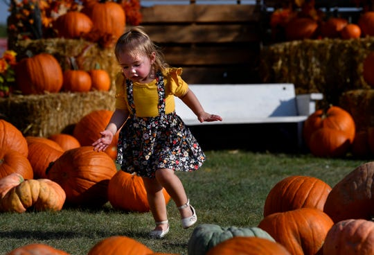 Dakota Ford, who will be 2 years-old later this month, runs through the Disability Resources, Inc. Pumpkin Patch Thursday. The patch is a fundraiser for DRI and will be open all the way to Halloween.