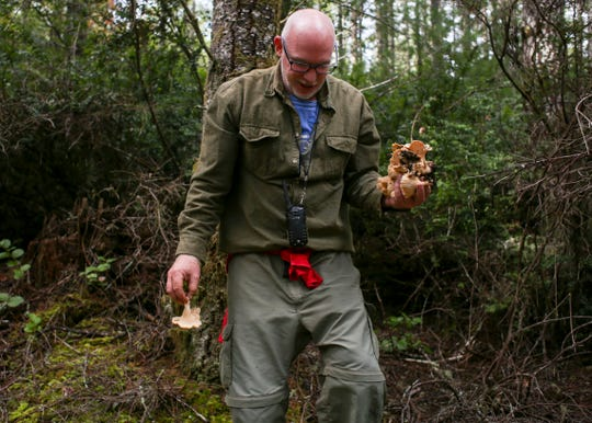 John Young, president of the Kitsap Mycological Society wanders back to the group after finding several chanterelle mushrooms during an excursion on Oct. 5 to Tahuya State Forest.