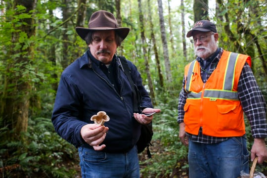 Brian McNett tries to identify a shamrock-shaped mushroom as Hank Anderson observes during the Kitsap Peninsula Mycological Society's excursion on Oct. 5.