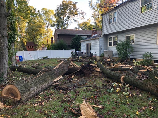 The remnants of a tree that crashed through the Gallo's Cherry Hill home remain in the backyard.