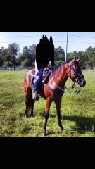 Collier County Sheriff's deputies are asking for the public's help in identifying suspects who stole horses over the weekend.