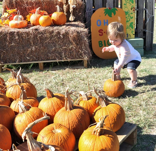 pick pumpkins from the Pumpkin Patch located at the University United Methodist Church located on Taft Blvd. Monday afternoon. 