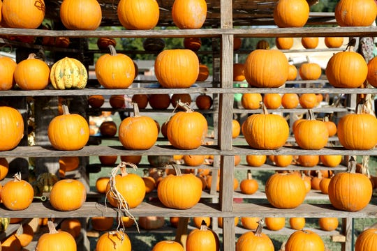 Small pumpkins are displayed in the University United Methodist Church annual pumpkin patch.