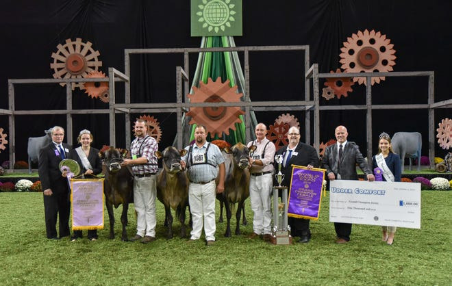 Vierra Dairy Farms of Hilmar, Calif. exhibited both the Grand Champion and Reserve Grand Champion at the International Jersey Show, October 2. Showdown Justine, the first-place Four-Year-Old Cow, followed Spritz as Reserve Grand Champion and Reserve Senior Champion.