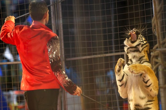 A tiger tamer interacts with a tiger in their show during the Carden International Circus Spectacular at the Clarksville Speedway and Fairgrounds in Clarksville, Tenn., on Monday, Oct. 7, 2019.