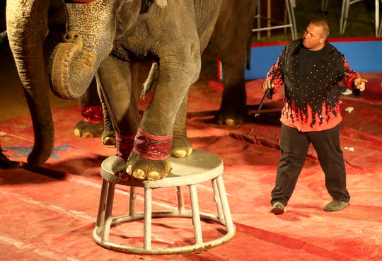 A trainer works with elephants performing in the ring during the Carden International Circus Spectacular.