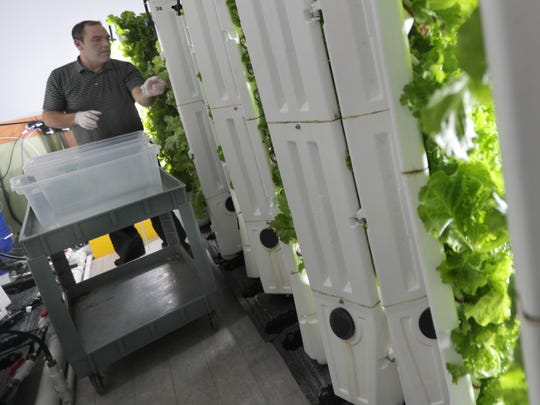 Operations manager Scott Schefe harvests lettuce from the indoor hydroponic grow system at the St. Joseph Food Program facility in Menasha.