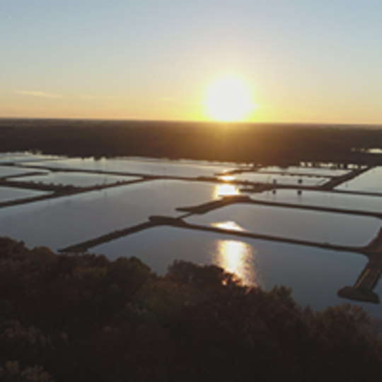Consolidated Catfish Producers, LLC catfish ponds in Isola, MS.