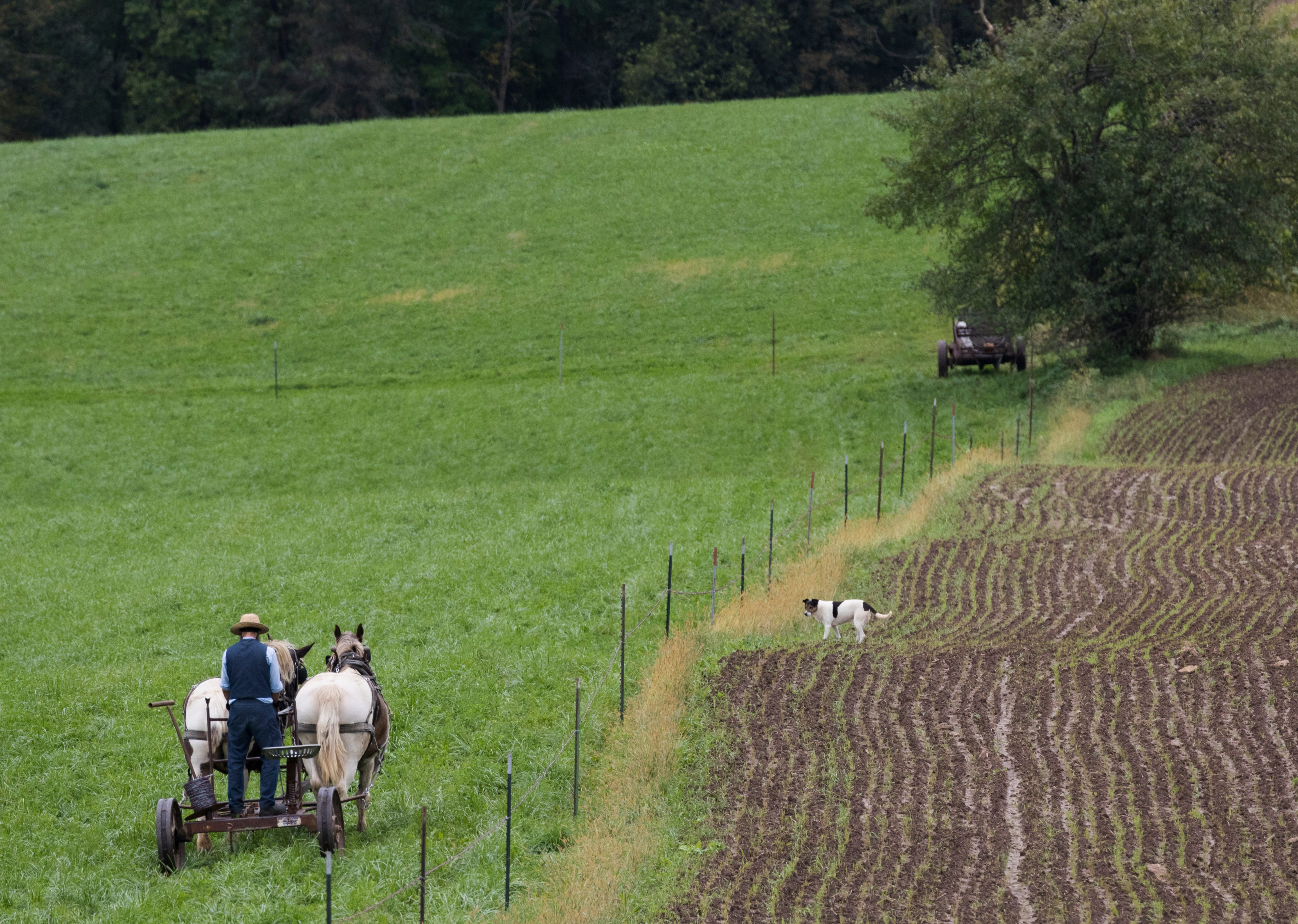An Amish farmer makes his way to work on a fence along Highway D between Cashton and La Farge.
