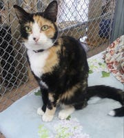 Corrina is available for adoption at Sun Cities 4 Paws at 11129 Michigan Ave. in Youngtown. For more information, call 623-773-2246 after 10 a.m.