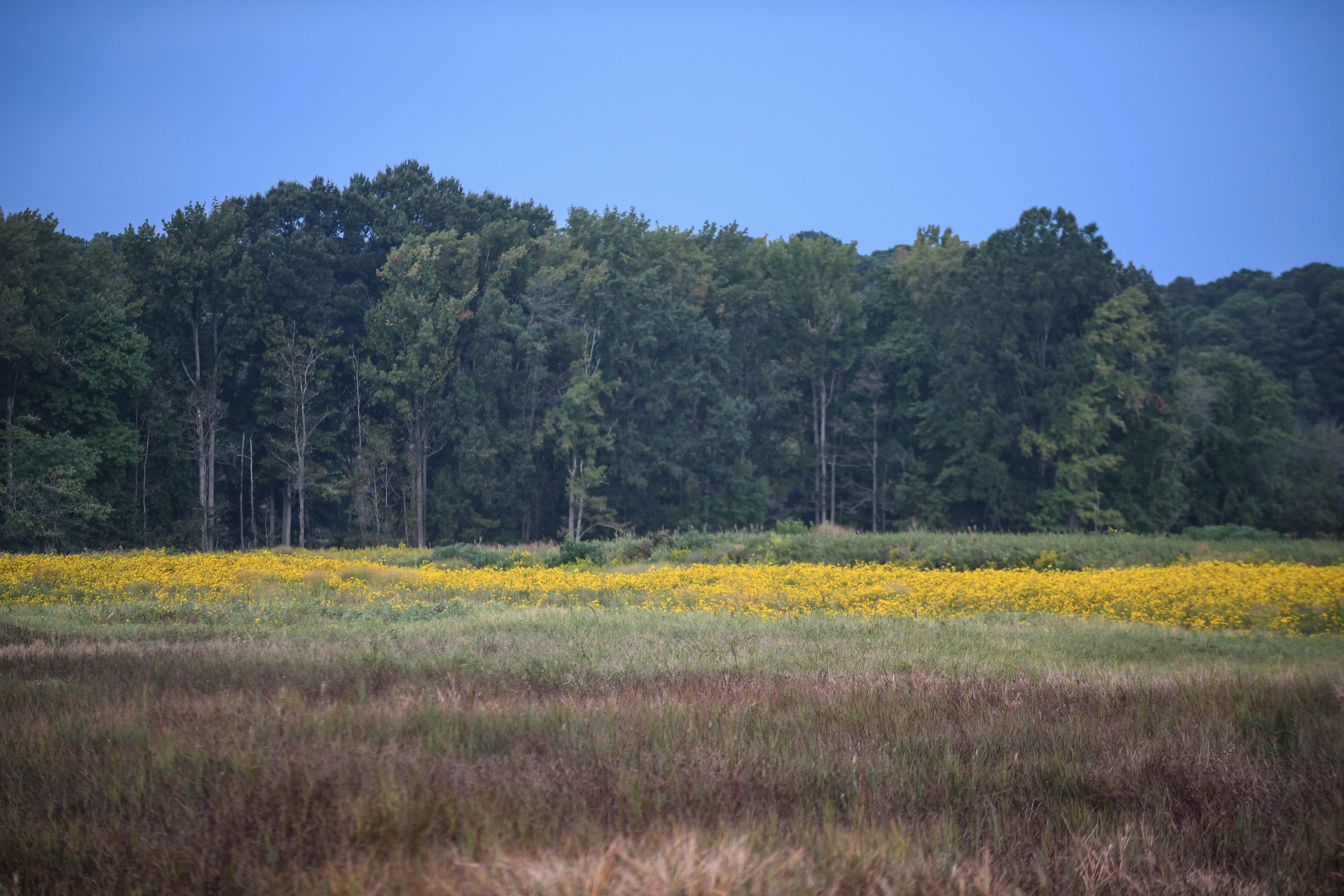 When she woke up a few days after suffering a traumatic brain injury, Harriet Tubman was put back in the field. The nearby Blackwater Wildlife Refuge is shown.