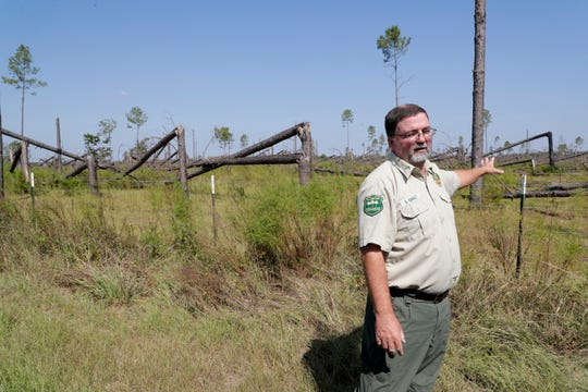 Florida Forest Service Forest Area Supervisor Steve Oswalt recalls that he inspected the field of slash pine trees planted on Highway 274 21 years ago when they were planted. Most of the trees were destroyed by Hurricane Michael last year.