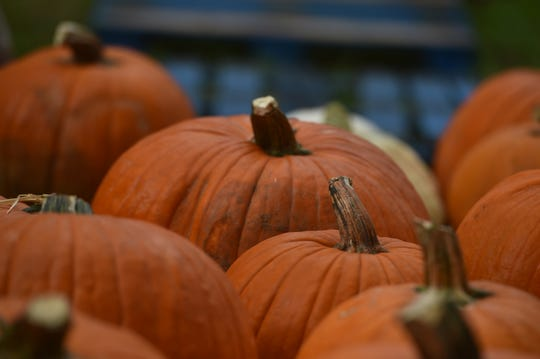 Fall festivals can be found at Palm City Presbyterian Church, at Redeemer Lutheran, in Roseland and in Hobe Sound this weekend.