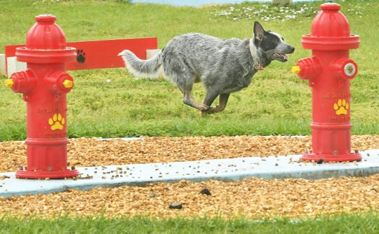 A dog races past a pair of water-squirting fire hydrants at Pieloch Dog Park on Florida Avenue in Melbourne.