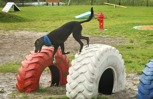 Shadow the dog jumps from a row of tires at Pieloch Dog Park on Florida Avenue in Melbourne.