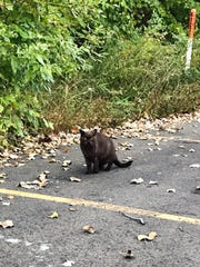 A cat seen Monday, Oct. 7, 2019, just inside the side parking lot of Big Lots in Meridian Township.