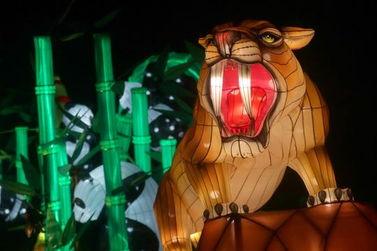 The Sabertooth cat display is one of the new attractions at this year's China Lights lantern festival at the Boerner Botanical Gardens in Hales Corners. The show concludes its run Sunday.