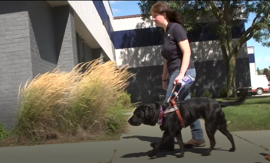 September was National Guide Dog Month and to mark the occasion a local nonprofit that hires the blind made a video with GoPros on their working dogs.