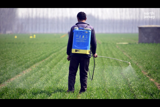Health and safety organizations throughout the world are at odds on how to classify Roundup and other herbicides using glyphosate.
