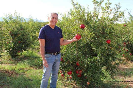 New Mexico Pomegranate owner and Alamogordo doctor Dan Moezzi holding a pomegranate growing on his farm in La Luz, NM.
