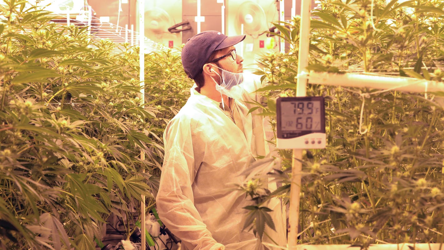 Southern California weed cultivators leading the way in sustainability