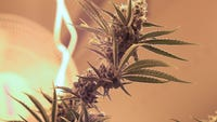 """An event to """"Be Heard on Cannabis"""" was held in St. Cloud Saturday, sponsored by DFL lawmakers"""