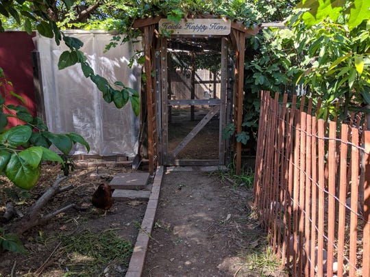 Peterson and his wife, Heidi, keep 12 chickens in a coop and run in their lush backyard.
