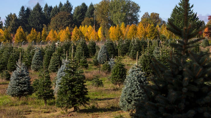 If Palmer's is your go-to place to cut a Christmas tree, you're out of luck this year