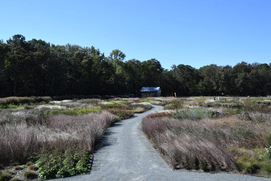 The recently-opened Delaware Botanic Gardens near Dagsboro is Sussex County's first botanic garden, boasting 70,000 plants, including perennials and grasses, a saltwater front, freshwater ponds, a learning center and woodlands. The Meadow Garden was designed by world-renowned plantsman Piet Oudolf. Friday, Oct. 4, 2019.