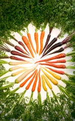 Originally purple and pale yellow in color, carrots have not always been orange. Today, ARS researchers have selectively bred carrots with pigments that reflect almost all colors of the rainbow.