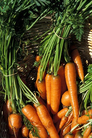 Carrots are a good source of beta-carotene, which is a precursor of vitamin A. But to get the full health benefits of this superfood, you need an active enzyme to produce this vitamin.