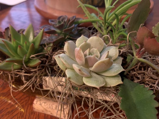 Melbourne Woman Turns Passion For Succulents Into A Full Time Business