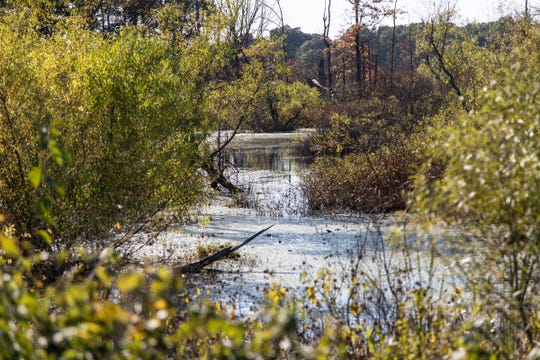 A marsh area off M-40, less than 3 miles away from the Bowen's home in Marcellus, Wednesday, Oct. 9, 2019.
