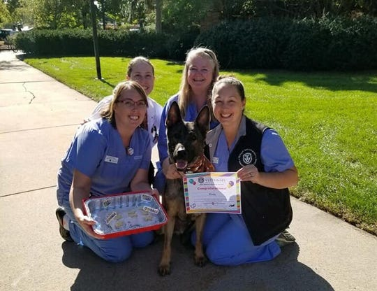 K-9 Kody, of the Bloomfield Twp. Police Department, poses with the MSU veterinary officials involved in his cancer treatment, which ended this week, six months after he was diagnosed with lymphoma.
