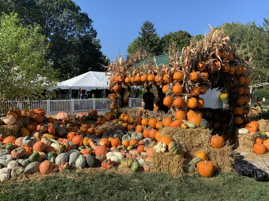 Newfields hosted 10,000 pumpkins for its inaugural Harvest festival.