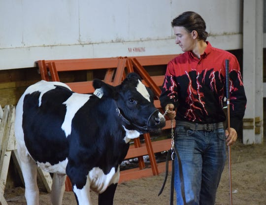 Wyatt Miller walks the feeder calf during the Super Showmanship competition Thursday morning. Contestants are judged on their knowledge of the different animals and their ability to show them.