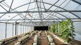 Auburn aquaponics project helps feed students