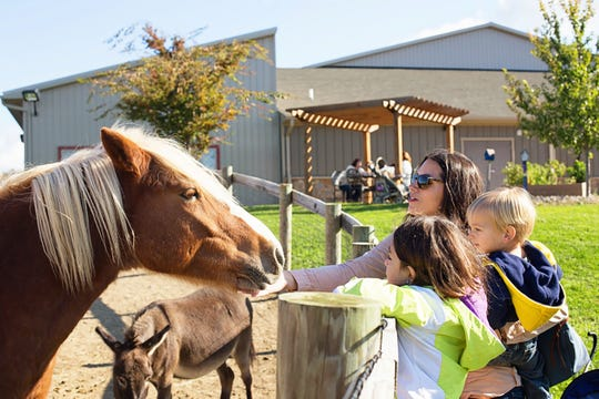 Leg Up Farm will hold its seventh annual Fall Fest at Leg Up Farm on Saturday.