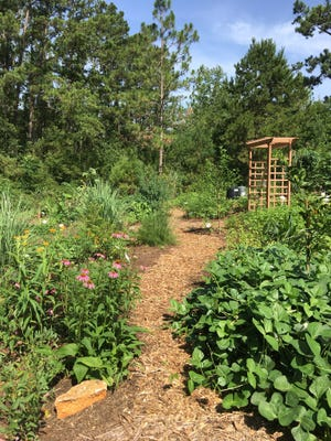 Visit the VegHeadz Edible Forest Garden on Sunday, October 13. Photo by Peggy McDonald.
