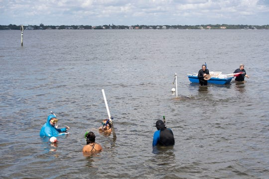 "Kathryn ""Katie"" Tiling (left), a research associate at Florida Oceanographic Society, leads a volunteer-based seagrass survey Wednesday, Aug. 21, 2019, in the Indian River Lagoon. Tiling said seagrass in Martin County is making a slow recovery after a summer without Lake Okeechobee discharges."