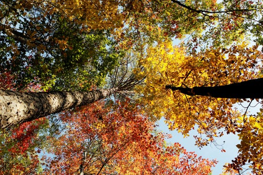 Autumn trees on the Twin Falls trail in Pickens County.
