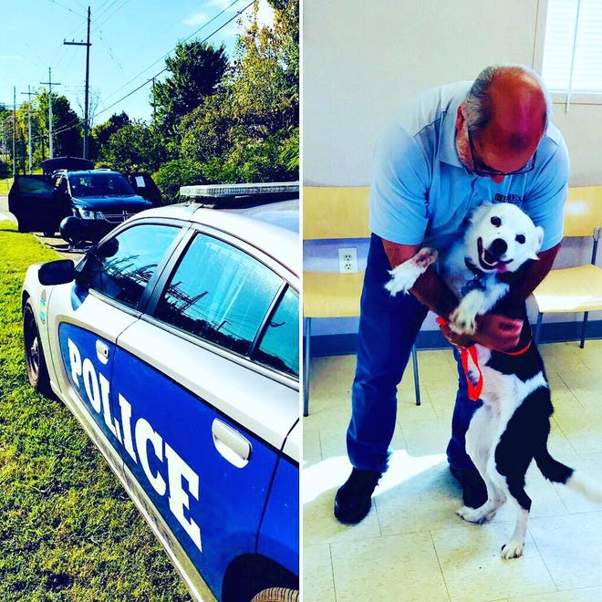 Russell the Border Collie was reunited with his human Oct. 11 after the car he was waiting in had been stolen. KPD recovered the car and found the good boy waiting inside it.