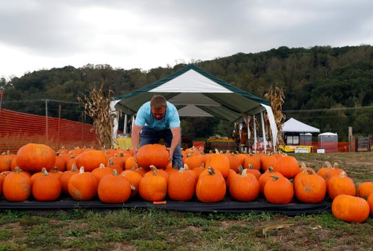 Aaron Ward moves pumpkins Thursday, Oct. 3, 2019, at Sharp Farms near Sugar Grove.