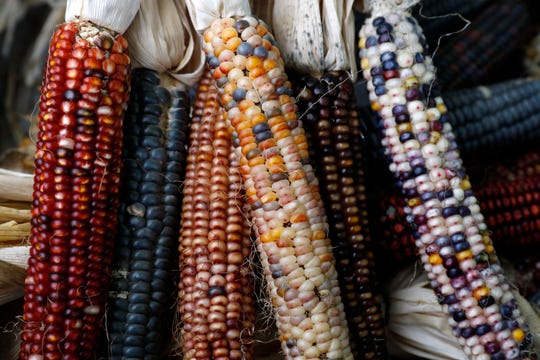 Indian corn sits in a display Thursday, Oct. 3, 2019, at Sharp Farm near Sugar Grove.