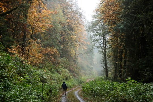In this Oct. 23, 2018 photo, Dave Wiens, a biologist who works for the U.S. Geological Survey, walks through a forest near Corvallis, Ore., carrying a digital bird calling device intended to attract barred owls to be culled.