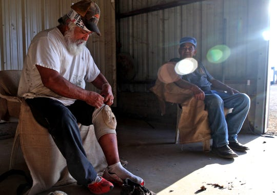 Pete Estrada, left, puts on a set of kneepads as he and Severo Soto, right, prepare to shear sheep Monday, Sept. 30, 2019.