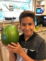 A family in Hawaii has claimed the title of world's heaviest avocado, with their fruit weighing in at a whopping 5.6 pounds.