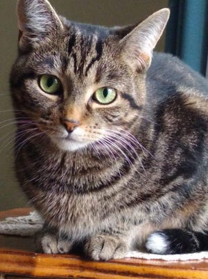 Rosabelle was voted the Purr-fect Cat in Richland County.