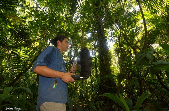 Marcelo Araya Salas, records hummingbird vocalizations in the jungles of Costa Rica.